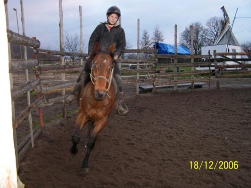 Koně ve výcviku